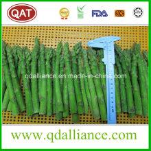 IQF Frozen Green Asparagus
