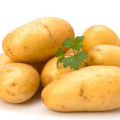 Fresh Yellow Holland Potato