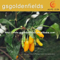 yellow Gojierry Seedlings With Strong Root System from China On Sale