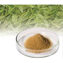 Los polifenoles en el té de té Polifenol