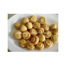 2016 Crop Canned Mushroom Ganze