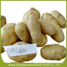 Exportar batata