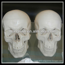 ISO Deluxe Life-Size Human Skull Model