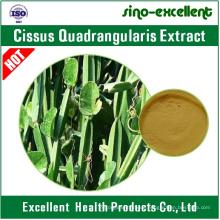 5: 1, 10: 1 Natürliches Cissus Quadrangularis Extraktpulver