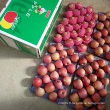 Qualité supérieure de pomme rouge Qinguan fraîche