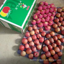 Top Quality of Fresh Red Qinguan Apple