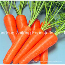 300-350g New Crop Chinese Fresh Carrot