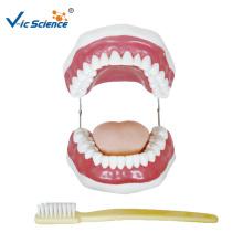 Demonstração de ensino do modelo de escovação de dentes