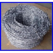 SGS electro galvanized barbed wire for sales