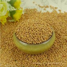 Besen Mais Hirse gelbe Hirse Konkurrenzfähige Preise