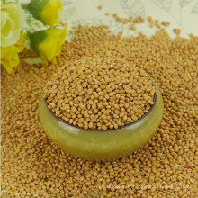 balai maïs millet millet jaune Prix compétitifs