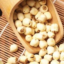 Semilla de loto orgánico Semen chino Nelumbini