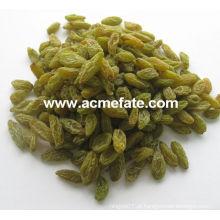Melhor preço passas verdes de xinjiang