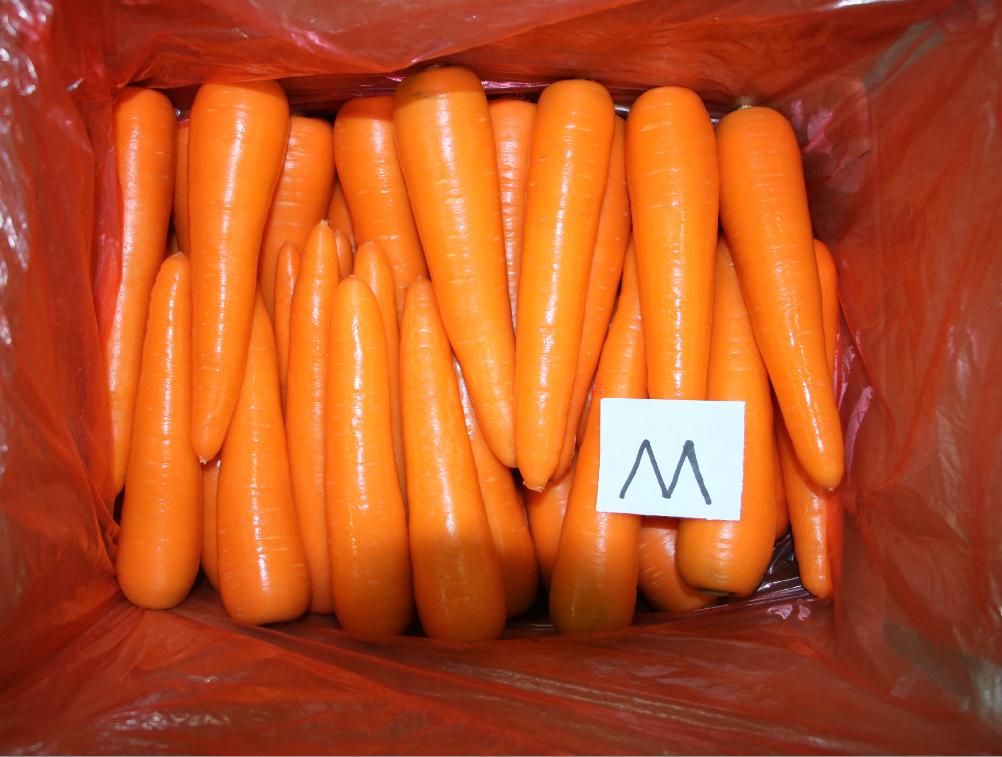 best carrot M