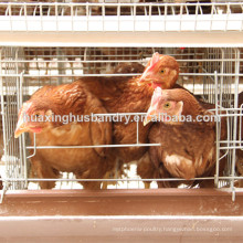 Soncap certificate A type& H type cages for chickens chicken cage
