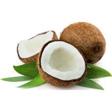 Gosto doce e de idade avançada, adultos, crianças Idade leite em pó de coco