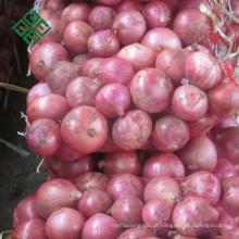 grande cebola fresca com baixo preço