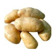 Nouvelle culture Bonne qualité de pommes de terre fraîches de Hollande