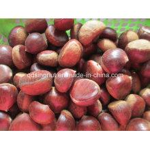2015 Harvest Fresh Chestnut (50-60)