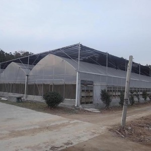Large Plastic Film Multi Span Greenhouse