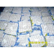 Nova colheita pura alho branco 250g saco pequeno