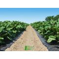 Fornecimento de fábrica da China em 2017 biodegradação