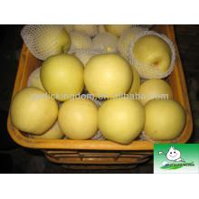 Китай Свежие золотые груши, груша фрукты