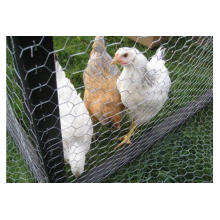 High Quality Rolls Chicken Wire Netting