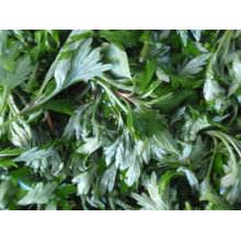 Asiatic Wormwood
