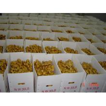 Bonne nouvelle récolte de gingembre frais (50g et plus)