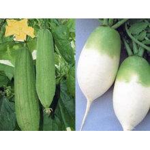 2011chinese cheap white radish