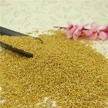 Mijo amarillo de alta pureza en cáscara