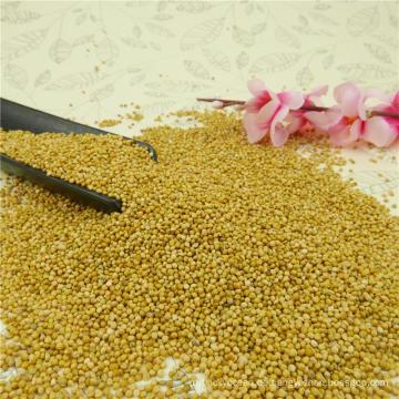 Hochqualitative gelbe Hirse in Schale, 2012 neue Ernte