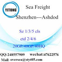 Shenzhen Port Sea Freight Shipping To Ashdod