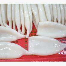 frozen seafood illex squid tube u5 u7 u10  supplier cheap price