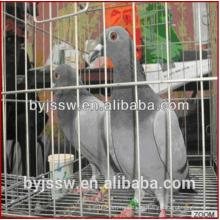 Hot Sale New Design Pigeon Crates para la venta