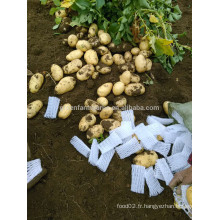 Importateurs de pommes de terre fraîches