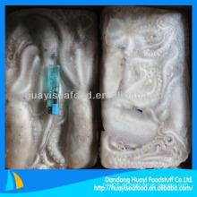 Frische gefrorene Peitschenwurzel Oktopus