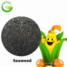 Extrait organique d'algue d'engrais soluble dans l'eau
