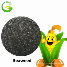 Fertilizante Seawed do extrato do Seawed da estrela 100% do Seafer de Qfg