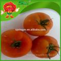 Frische Tomate
