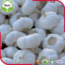 Hochwertiger Pure White Knoblauch 5.0cm für den Export