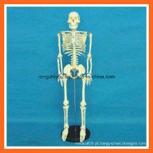 Modelo de anatomia do ensino médico de esqueleto humano de 85 cm