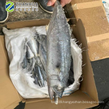 Frozen Spanish mackerel, king mackerel wr, 2016 japanese spanish mackerel China