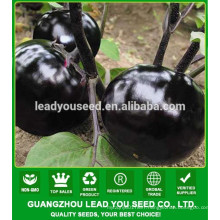 NE07 Yuanyuan round shape black eggpalnt seeds factory