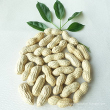 Chinese Wholesale Peanuts In Shell