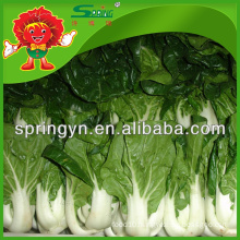 Fresh cabbage Chinese white cabbage price