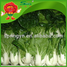 Repolho fresco Preço chinês do repolho branco