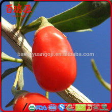 Goji berries where to buy local goji berries where to buy dried goji berries where to buy
