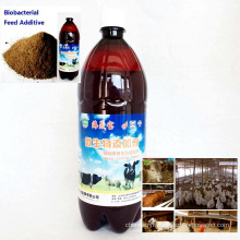 Algae Bio Agent Bacterial Agent for Feed Additive